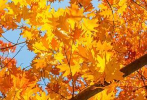 hojas amarillas rojas
