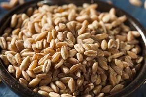grano de farro crudo orgánico