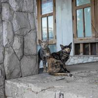 gato callejero en casa abandonada foto