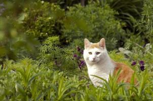 Sitting house cat in the garden photo