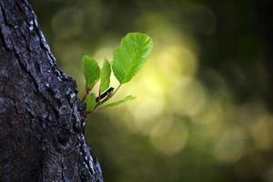 New Born Leaf photo