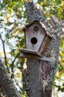 casa de aves colgando de un árbol