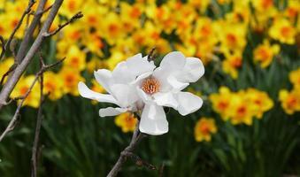 flor blanca solitaria foto