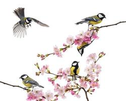 group of great tit perched on a flowering branch photo