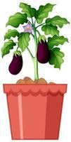 Eggplant potted plant design vector
