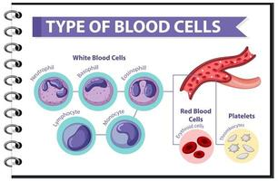 Type of blood cells educational design