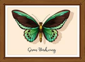 Butterfly on wooden frame