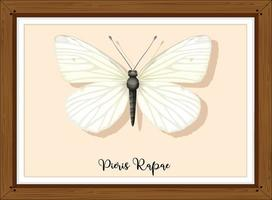 Pieris rapae buttlerfly on wooden frame vector