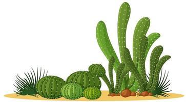 Natural cacti design vector
