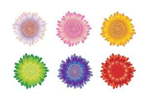 Beautiful flowers set vector