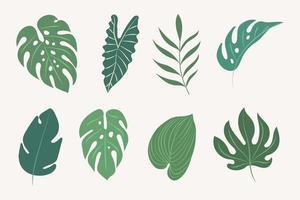 conjunto de hojas tropicales vector