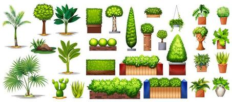 colección de especies de plantas y árboles vector
