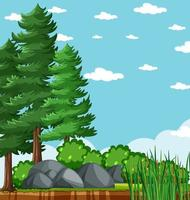 árbol de pinos en el parque natural con cielo azul brillante en blanco