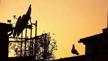 puesta de sol en antenas parabólicas