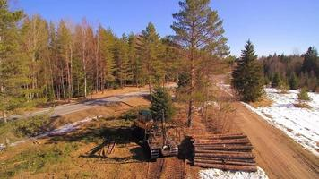 Aerial view of the logs on the ground
