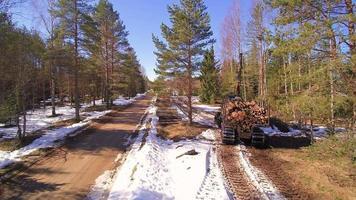 a área da floresta onde há uma pilha de toras