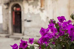 Islander's house and flowers in Dali,China. photo