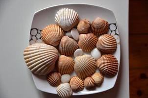 Shells at home photo