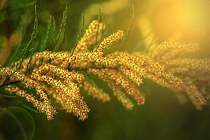 cadenas de flor de helecho en la luz del atardecer