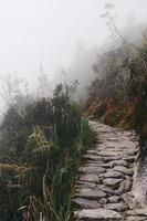 Mystical Foggy Jungle Road Path in Peru