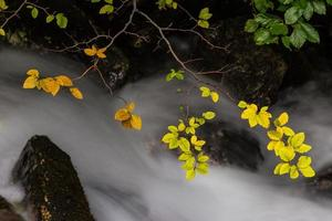 Autumn foliage and flowing stream