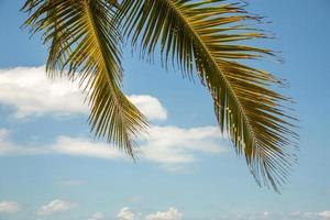 Palms of Vietnam