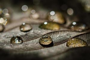 Water drops photo