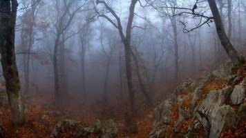 Misty wood photo