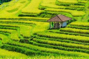Stepped rice Terrace photo