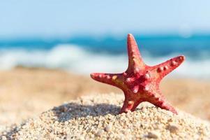 Red starfish at the beach photo