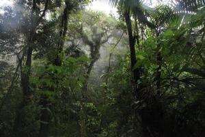Selva de Costa rica photo