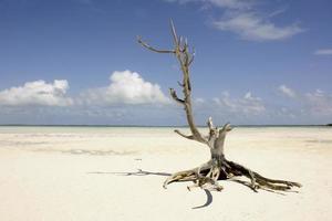 paisaje de marea baja