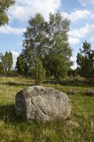 Brezales de luneburg - brezales con piedra roca foto
