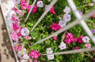 Wild little flower photo
