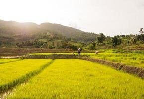 granjero en el campo