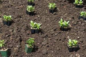 Flower Seedling