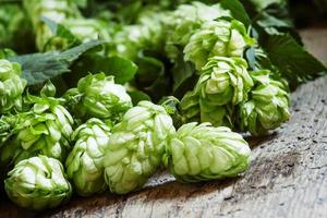 Green hop cones with leaves on the old wooden table