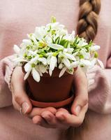 Flowerpot with snowdrops by hands