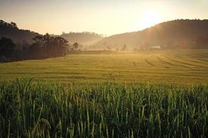 Terraced Rice Fields at Sunrise, Chiang Mai