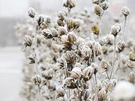 Frozen hedge photo