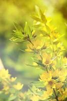 Yellow wildflowers (fragmetn bouquet) photo
