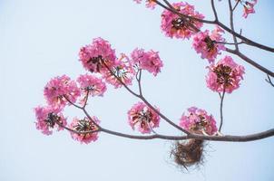 pink flower on high tree