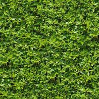 arbusto verde. textura enlosable sin fisuras. foto