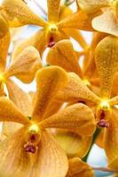 Beautiful Thai orchid flower