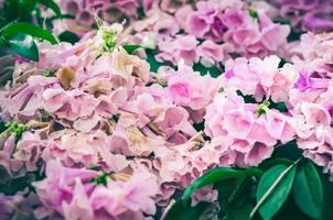 Pink flower vintage photo