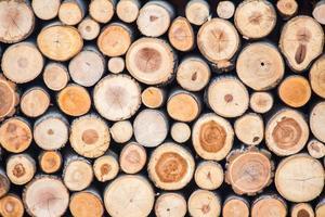 stump texture photo