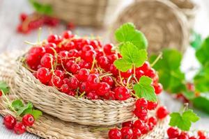 red currant photo