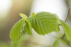 jeune branche avec des feuilles