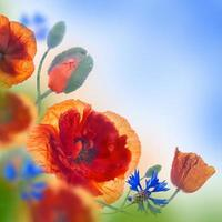 Red poppies field and blue cornflowers