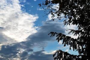 silhouetten van boomtakken en bewolkte hemel